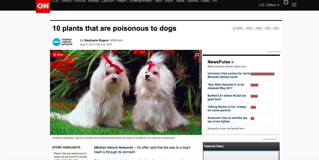 Article: 10 plants that are poisonous to dogs