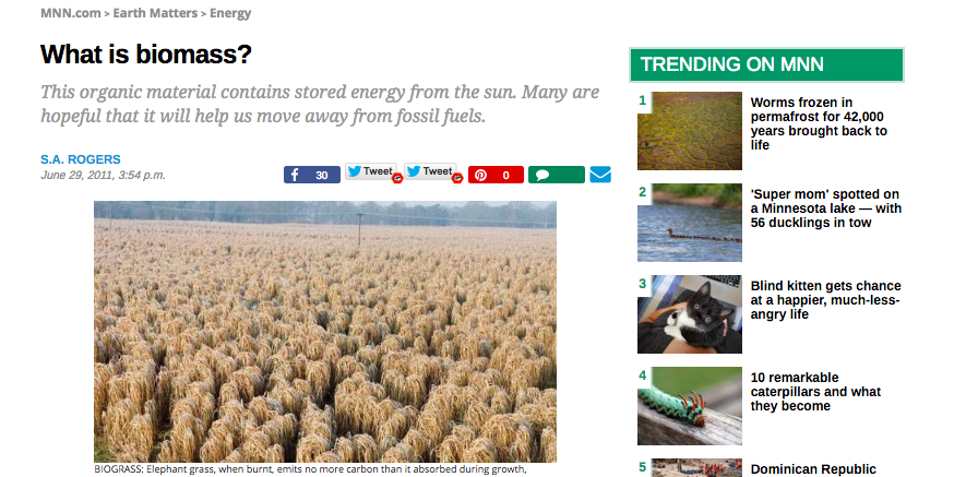 SEO Article: What is biomass?